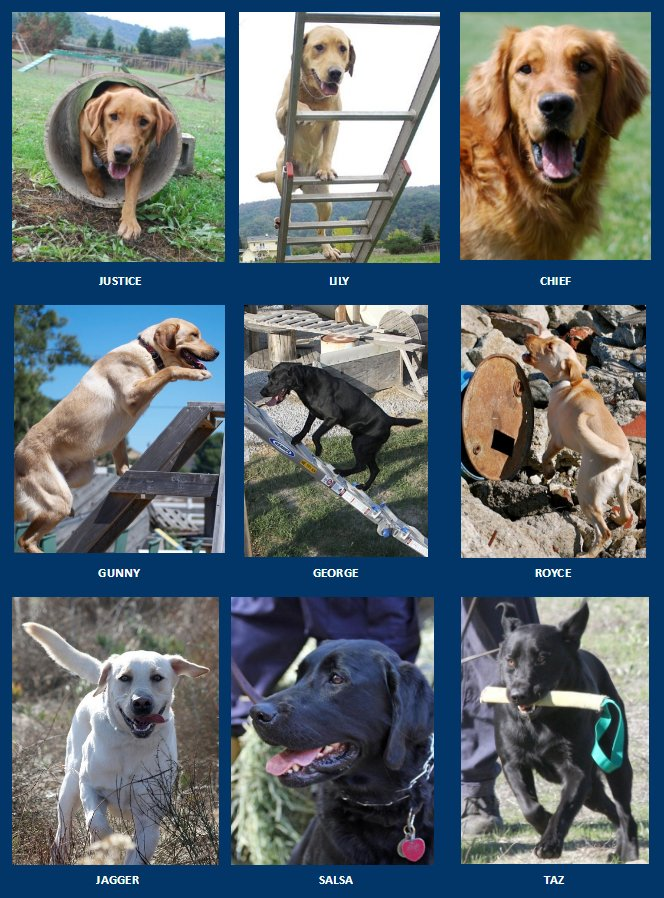 SDF dogs searching in Moore, OK