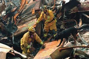 Search in the WTC debris