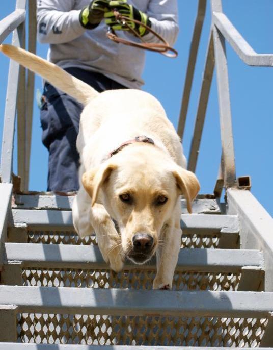 Search Dog Gunner