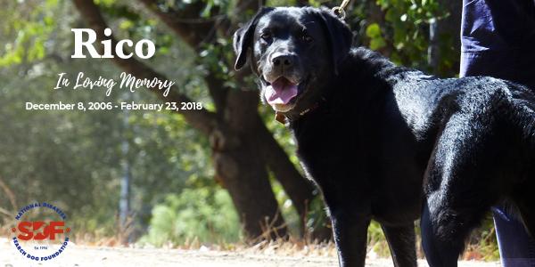 In Loving Memory of Rico, 2006 – 2018