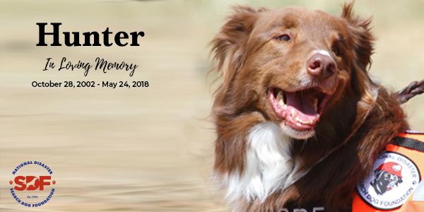 In Loving Memory of Hunter, 2002 – 2018