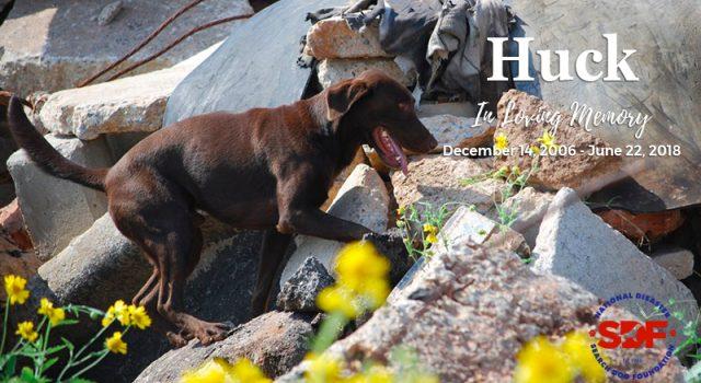 In Loving Memory of Huck, 2006 – 2018