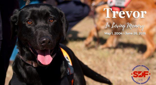 In Loving Memory of Trevor, 2004 – 2018