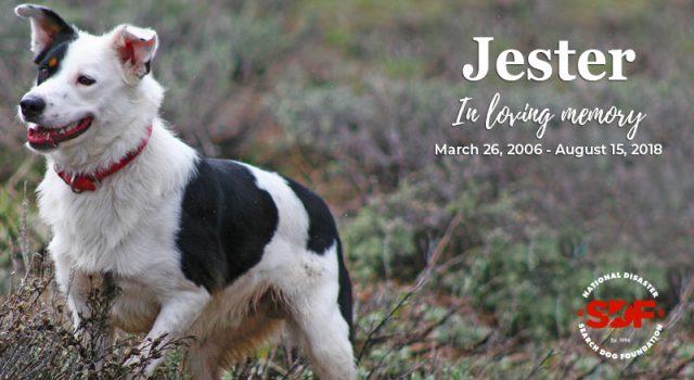 Jester (2006 – 2018)